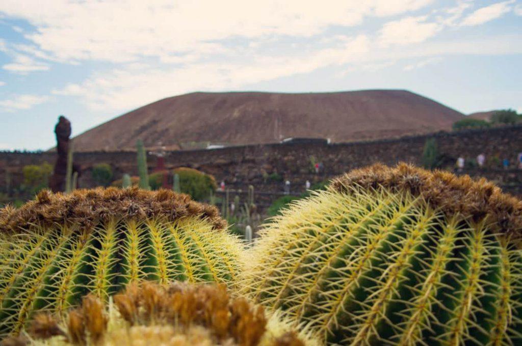 Todo Mundo e Bom visitare Lanzarote guida completa, Jardín de Cactus